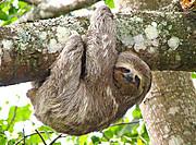 Sloth1r3wma